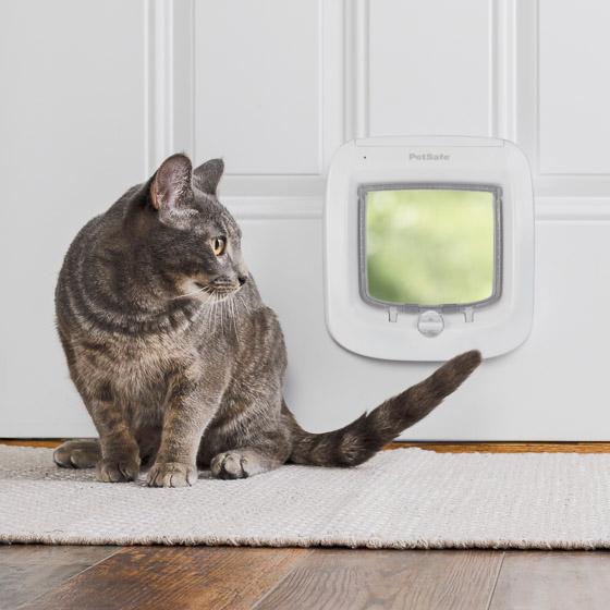 namuose yra katinas arba šuo