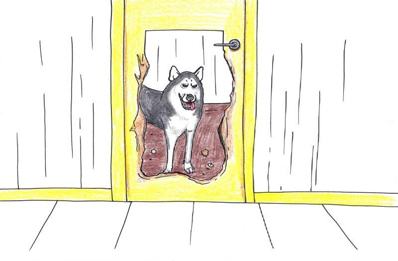 Kokias vidaus duris rinktis, jeigu namuose yra katinas arba šuo?